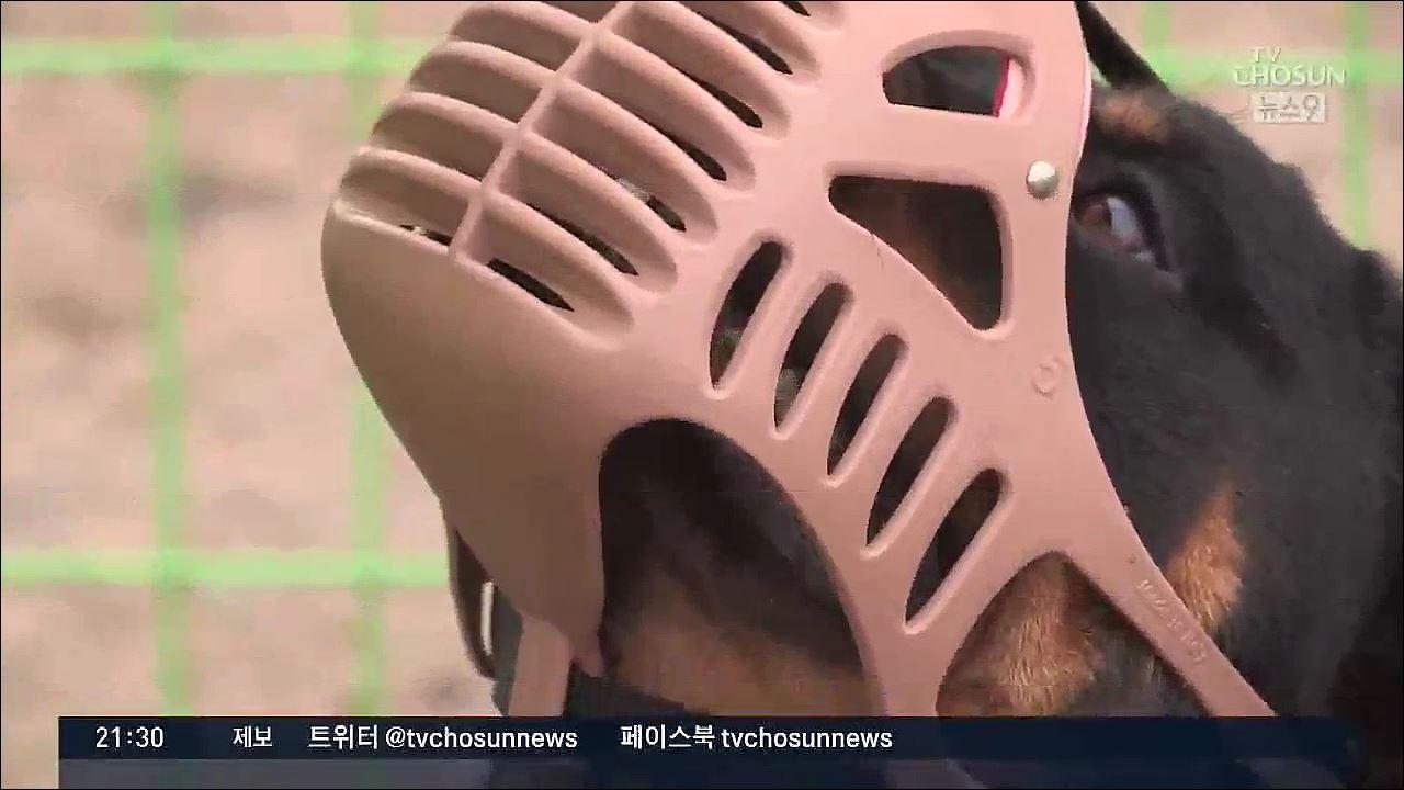 [포커스] 男 중요부위 공격한 대형견…'맹견 지정' 허점