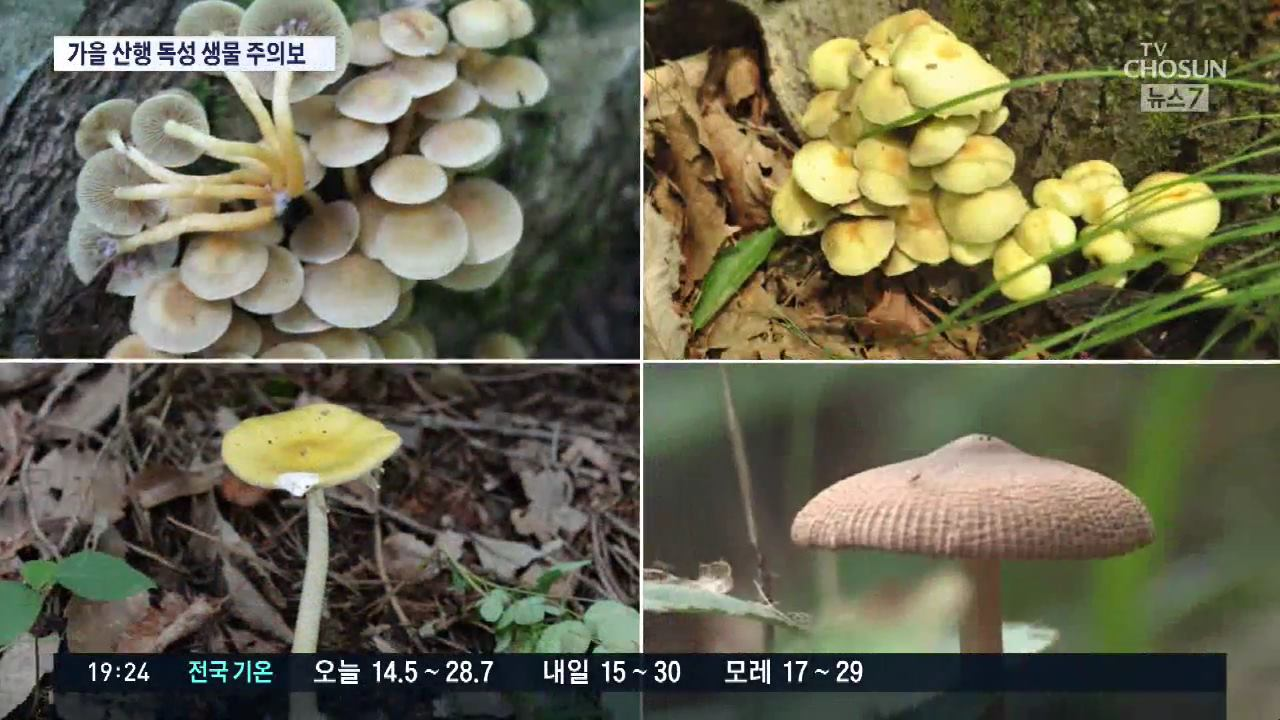 가을철 산행  '독버섯' 채취 주의…독사·말벌도 조심해야