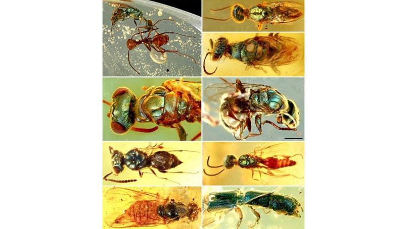 9900만년 전 공룡시대 곤충은 이런 색이었다