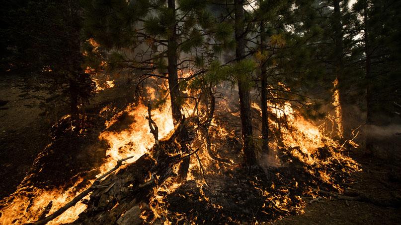 거세지는 美 서부 동시다발 산불…15명 사망· 50만명 대피령