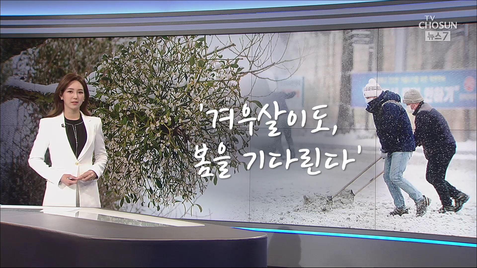 [오현주 앵커가 고른 한마디] 겨우살이도 봄을 기다린다