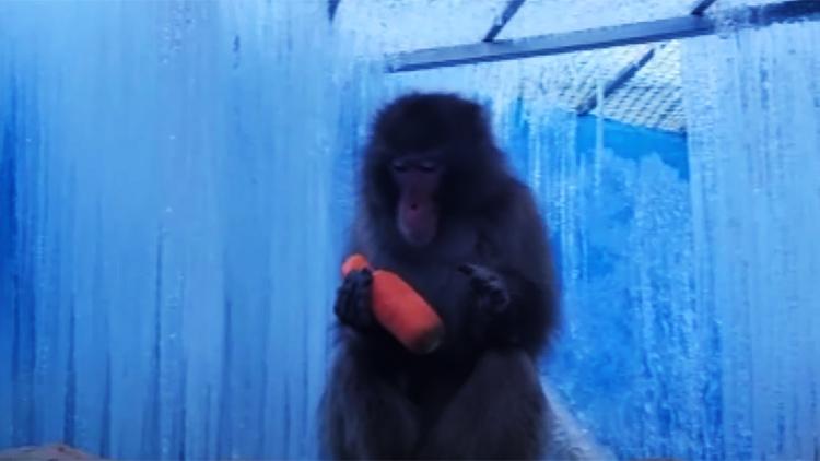 원숭이 우리에 고드름 천지…'코로나 영업난' 테마파크 동물 수난