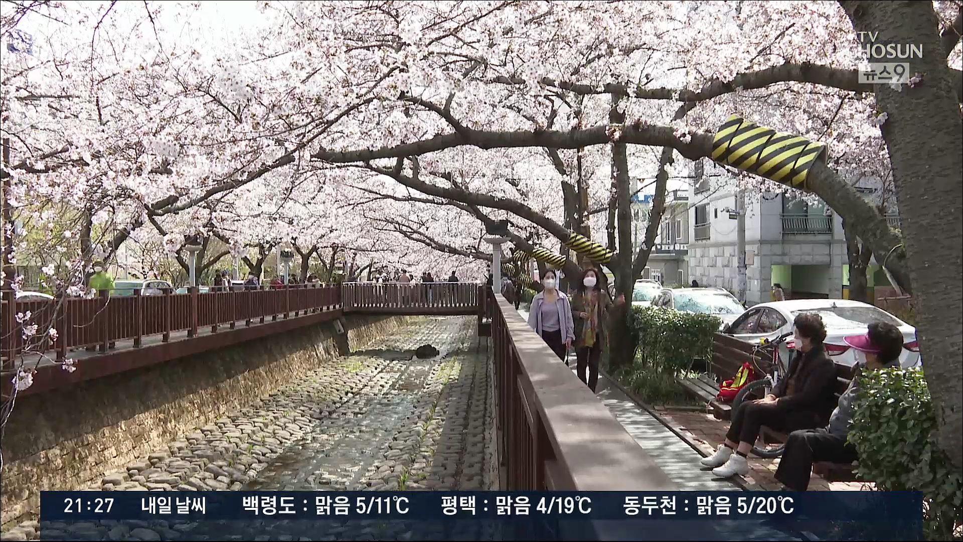 벚꽃 인파에 시민 '불안'…봄꽃 명소마다 방역 골머리