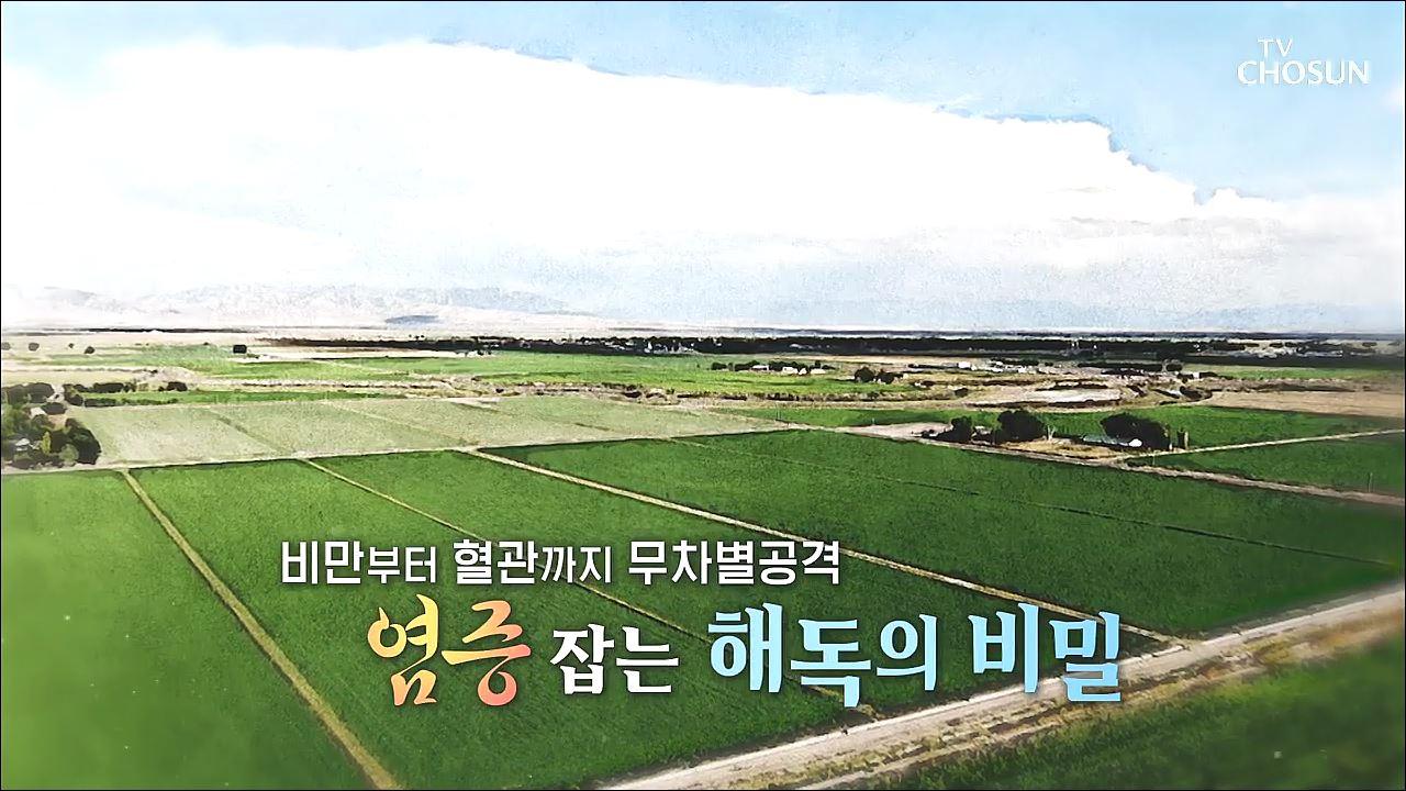 백세시대 프로젝트 위대한 유산 74회