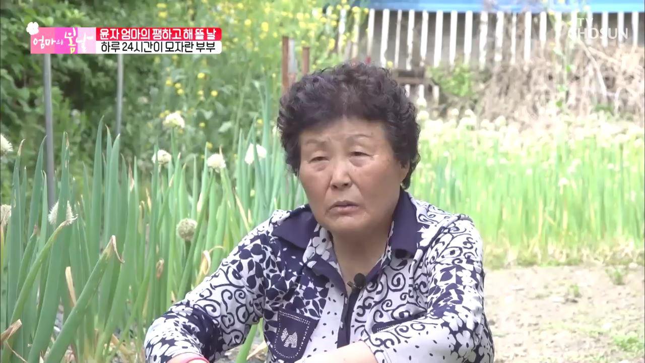 엄마의 봄날 246회
