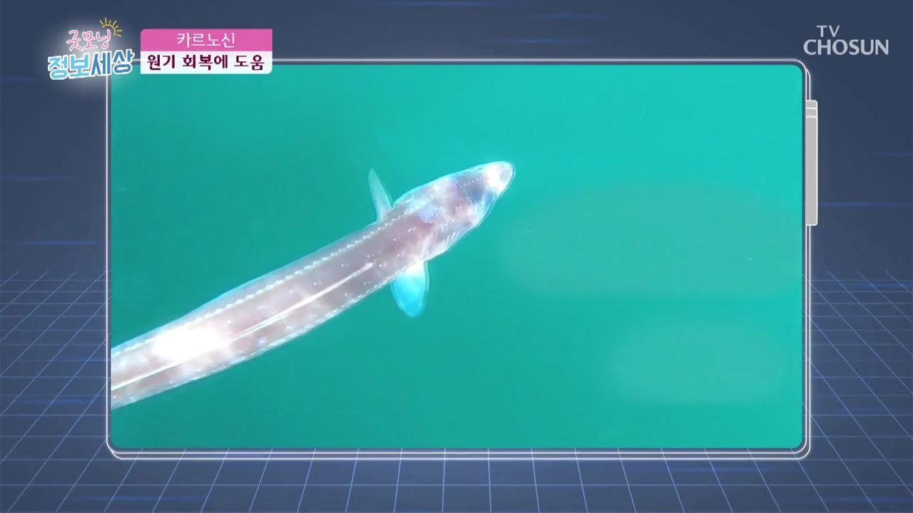 굿모닝 정보세상 226회